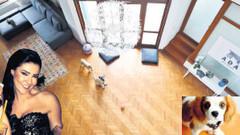 Müge Emeç köpeğini sakatlayan otele dava açtı