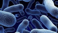 Dünyada uzaylı organizmalar yaşıyor olabilir