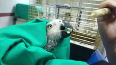 Murat Özdemir tarafından işkence edilen papağanın son durumu!