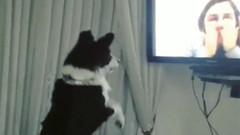 9 aydır görmediği sahibini televizyonda gören köpek böyle deliye döndü