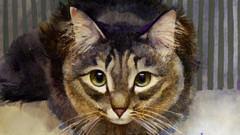 Kediniz sizi seviyor mu? İşte kedilerin sevgisine işaret eden 9 hareket