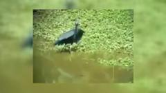 Ramazan'da saklanarak su içen kuş videosu gerçek mi?