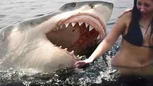 Köpek balıklarının kişilikleri olduğu ortaya çıktı