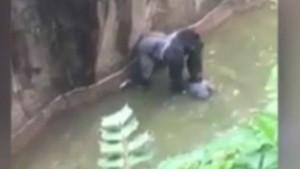 Hayvanat bahçesinde yanına çocuk düşen goril öldürüldü