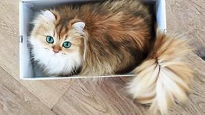 Fotojenik kedi Smoothie