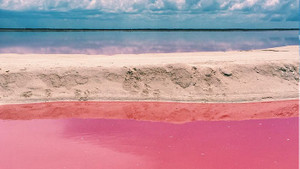 Meksika'daki Pembe Göl
