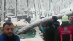 Fırtınadan kopan çam ağacı taksinin ön camından içeri girdi