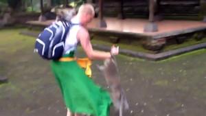 Maymun turisti böyle ısırdı