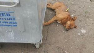 Ordu Gölköy'de köpek katliamında flaş gelişme