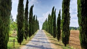 Mezarlıklara neden selvi ağacı dikilir? Sümerlerden kalan geleneklere çok şaşıracaksınız