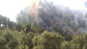 Aydın'da 50 dönümlük zeytinlik alan yandı