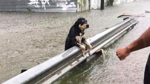 Kasırganın ortasında çaresizce bekleyen zavallı köpek yürek burktu