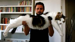 7,5 kiloluk kedi görenlerin ağzını açıkta bıraktı