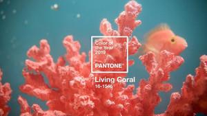 Pantone Renk Enstitüsü 2019'un rengini açıkladı: Living Corel