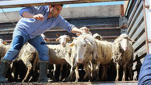 300 koyun projesinde flaş açıklama