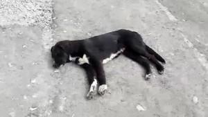 Köpekler can çekişirken gözyaşları içinde isyan etti