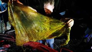 Ölü balinanın karnından bakın ne çıktı