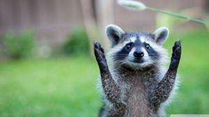Tatlı mı tatlı sosyal medya fenomeni 10 hayvan