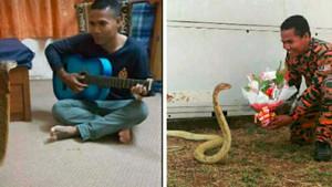 Ölen sevgilisine benzetti, kobrayla evlendi