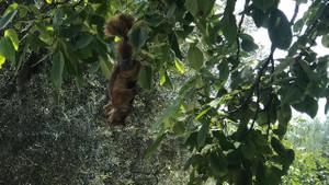 Bursa'da vahşet! Sincapları öldürüp, ağaca astılar