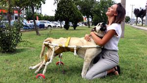 Ayakları tutmayan köpek için plastik borulardan yürüteç yapan hayvansever!