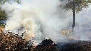 Bodrum'da çıkan orman yangınında alevler köylere ulaştı