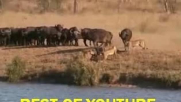 Dünyada en çok izlenen video hangisi? İşte o görüntü!!! VİDEO