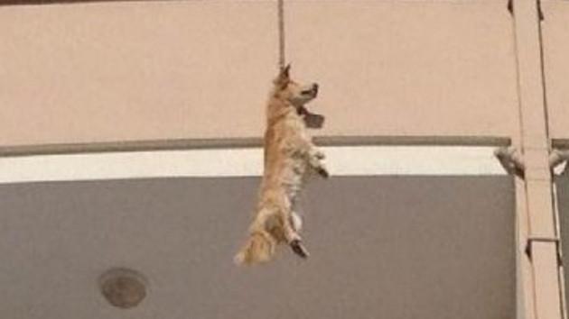 Köpek intihar mı etti? Şok görüntü...