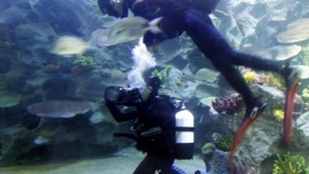 Dünyanın en büyük akvaryumu İstanbul'da açıldı!