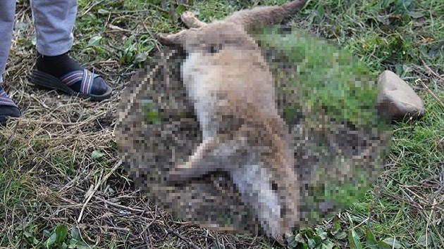 Diyarbakır'da su samuru silahla vurulup öldürüldü