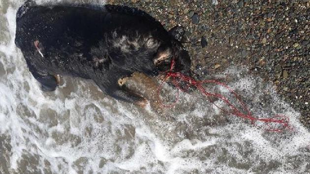 Yine vahşet: Köpeğin boğazına ip geçirip denizde boğarak öldürdüler