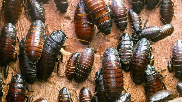 Derimin altında böcekler var dedi kollarını tırmalamaya başladı