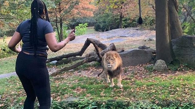 Aslanla burun buruna geldi! Sosyal medya bu kadını konuşuyor…