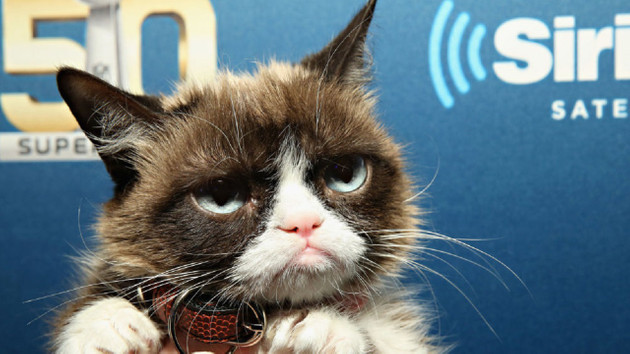 İnternet fenomeni Huysuz Kedi hayatını kaybetti
