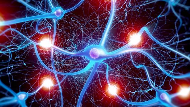 LSD ve sihirli mantar beyin hücreleri arasında yeni bağlantılar kurulmasını sağlıyor