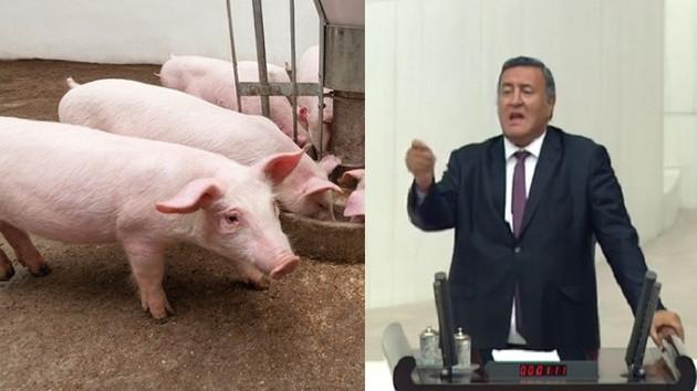 CHP'li Gürer: AKP döneminde domuz eti kasaplık et haline geldi