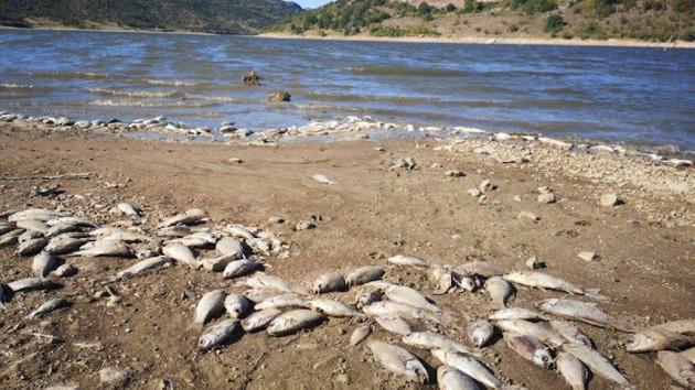 Ölü balıklar kıyıya vurdu, yetkililer harekete geçti