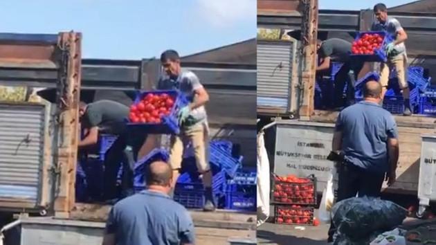 Ucuza satmak yerine, domatesler çöpe dökülüyor!