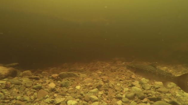 Loch Ness canavarı mı? Göldeki dev yılan balığı ilk kez görüntülendi