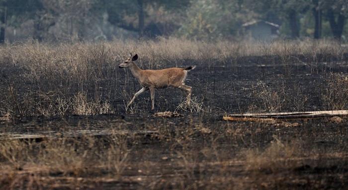 California tarihinin en büyük yangını Eylül'e kadar sürebilir