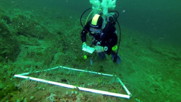 Adalar'dan sonra Marmara Adası'ndaki mercanları da öldürdük
