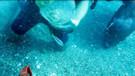 Denizdeki tutsak canlıları özgürlüklerine kavuşturuyorlar