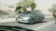 At mı otomobile çarptı, otomobil mi ata çarptı? VİDEO