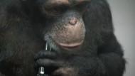 PETA'nın reklam filminde maymun intihar ediyor!