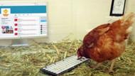 Twitter kuşundan sonra Twitter tavuğu