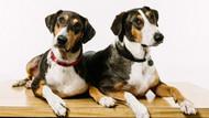 Köpek klonlama dönemi başlıyor!