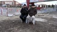 Cengiz Çandar ve Hasan Cemal umut nöbetinde