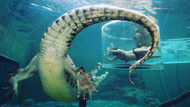 Ekstrem tatil: Avustralya'da timsah havuzu
