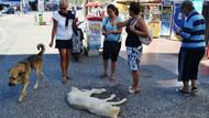 Sıcakta bayılan köpek su ile hayata döndü