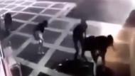 Şanlıurfa'da 3 polisin şehit olduğu saldırı anı